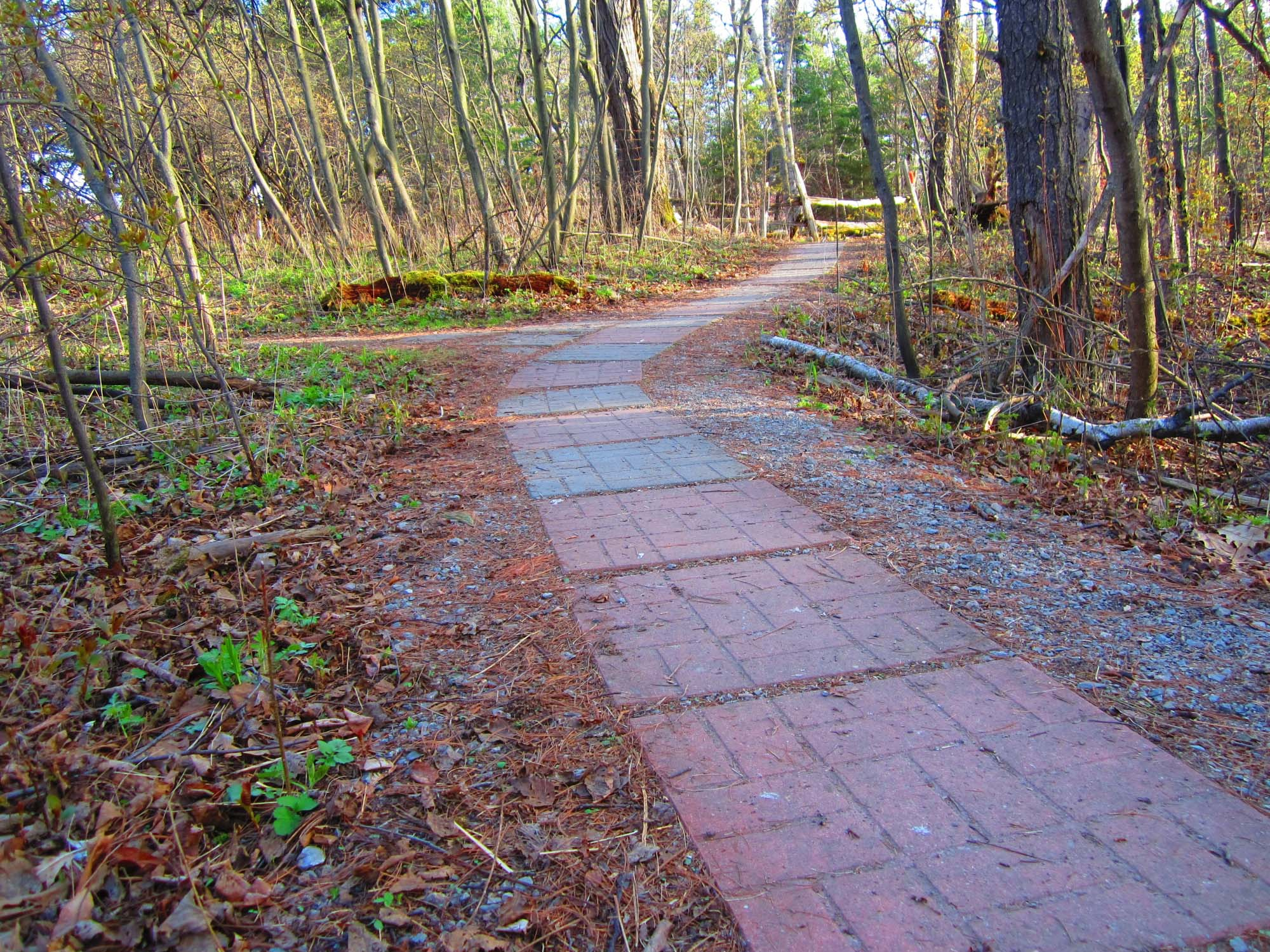 Thickson Woods Paved path