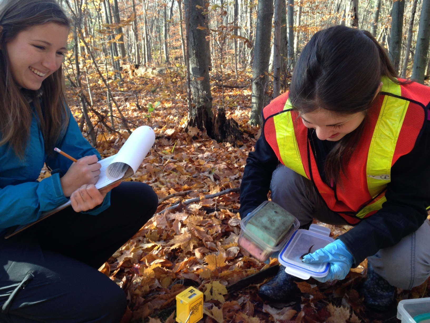 Monitoring for salamanders