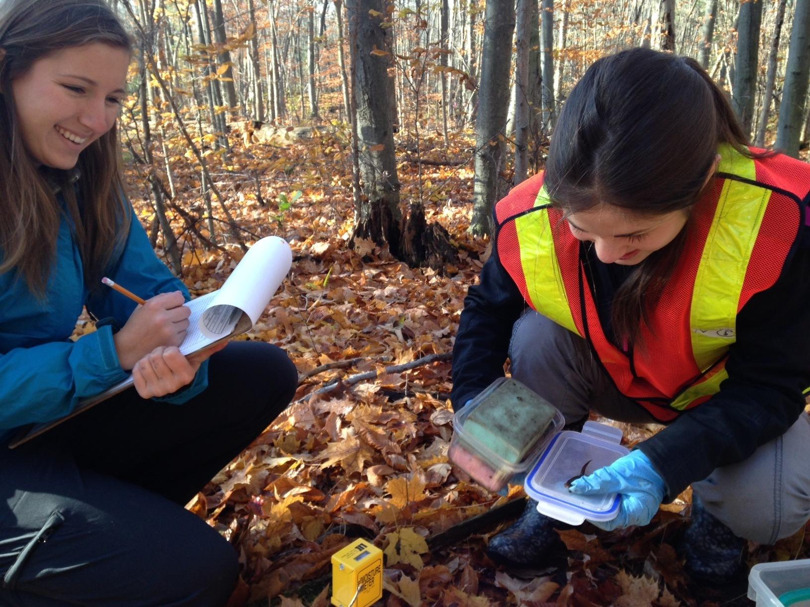Monitoring for salamanders